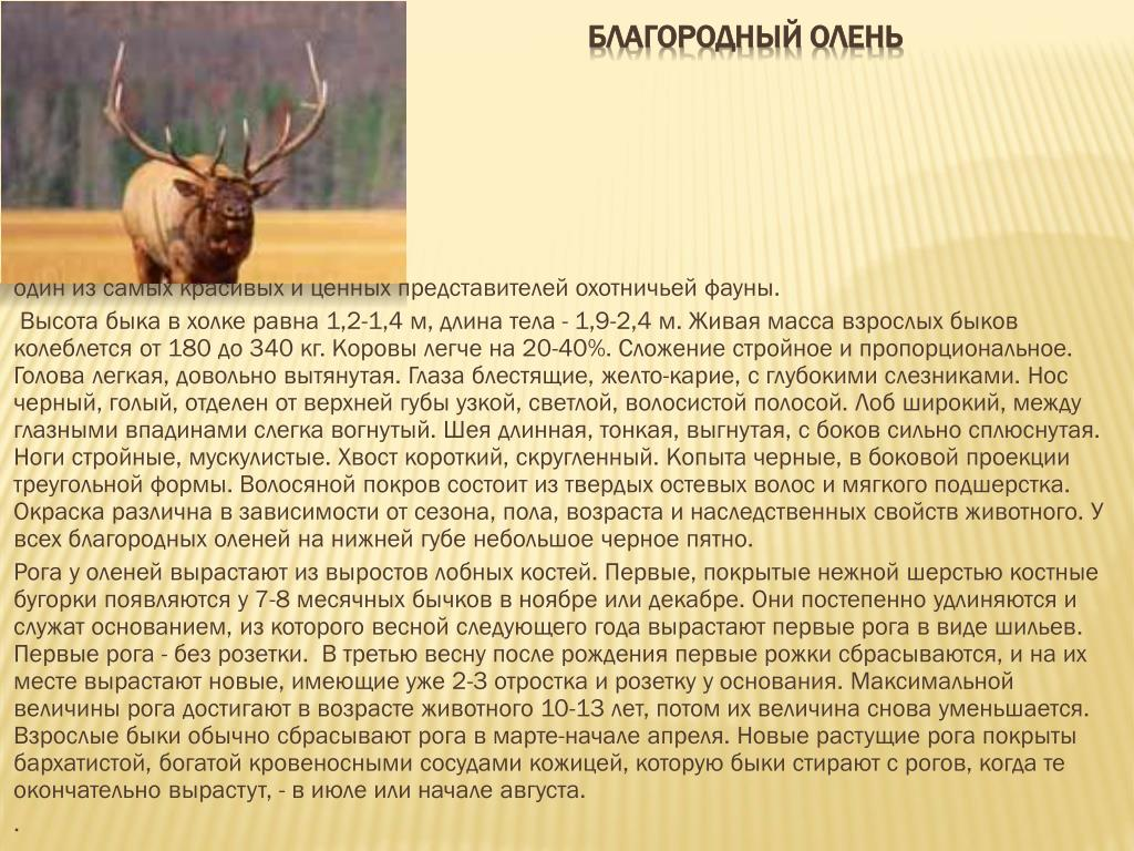 все об оленях фото описание видов она была изобретена