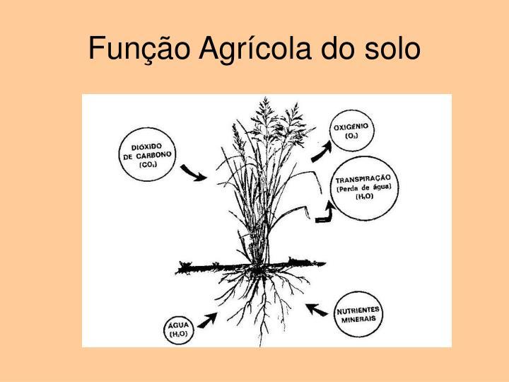 Função Agrícola do solo