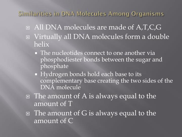 Similarities in DNA Molecules Among Organisms
