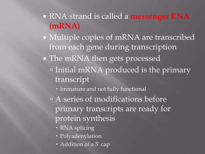 RNA strand is called a