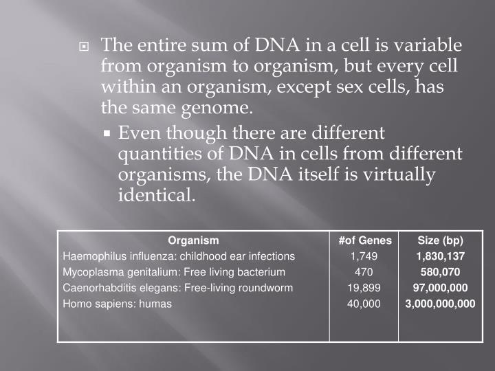The entire sum of DNA in a cell is variable from organism to organism, but every cell within an organism, except sex cells, has the same genome.