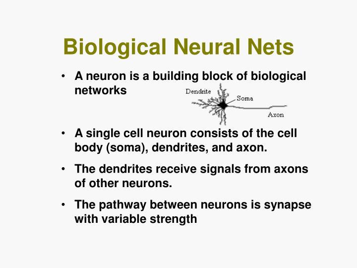 Biological Neural Nets