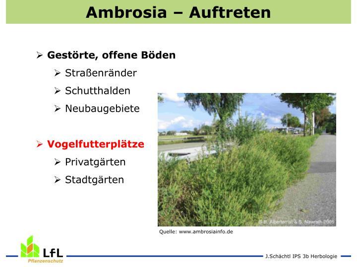 Ambrosia – Auftreten