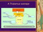 a thalamus szerepe