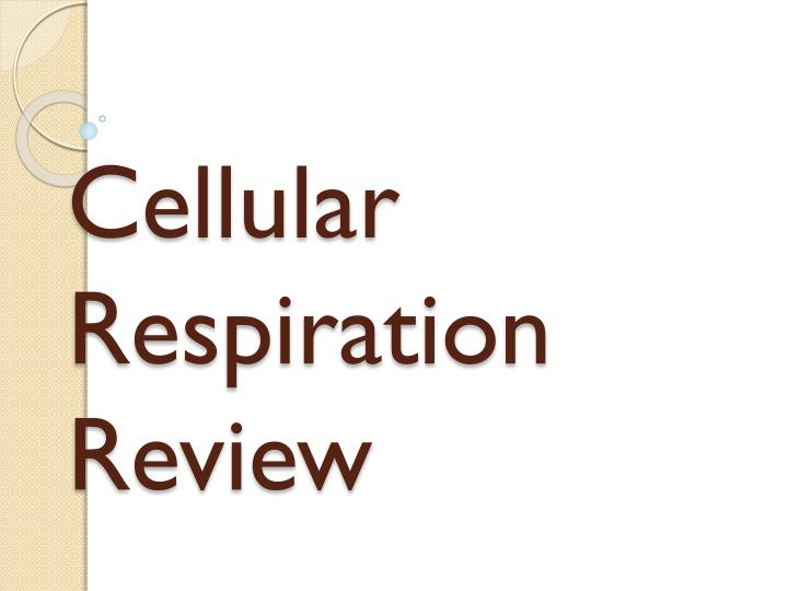 cellular respiration review n.