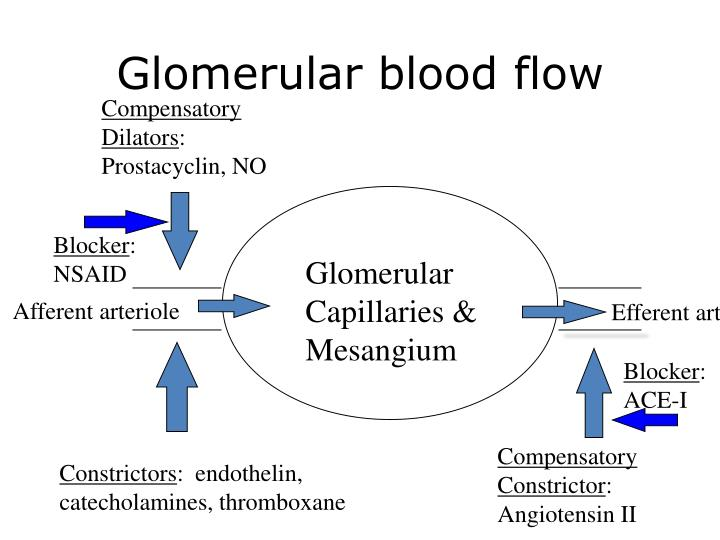 Glomerular blood flow