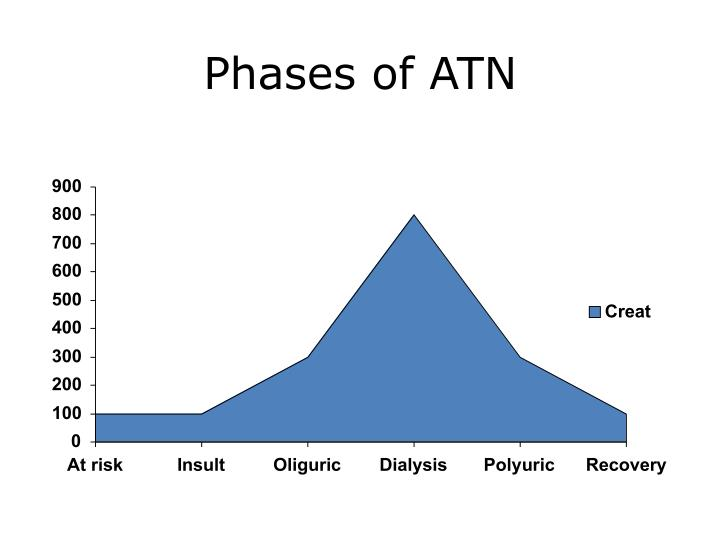 Phases of ATN