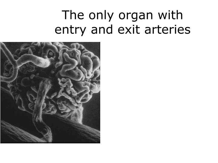 The only organ with