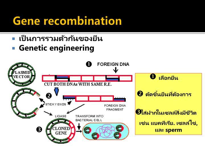 Gene recombination