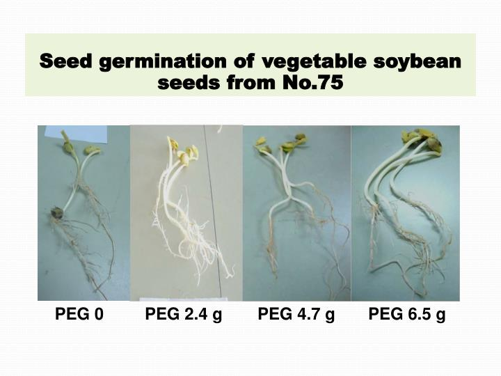 Seed germination of vegetable soybean seeds from No.75