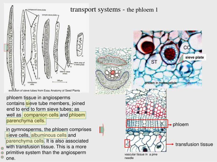 Ppt Applied Plant Anatomy Powerpoint Presentation Id4099918