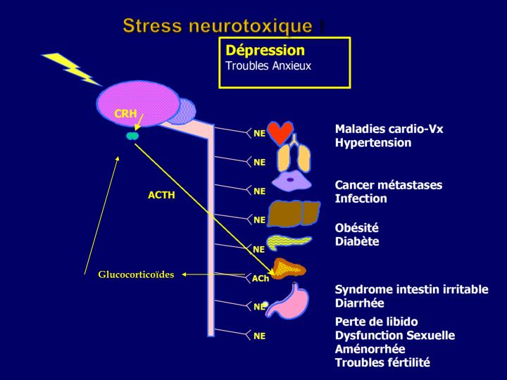 Stress neurotoxique
