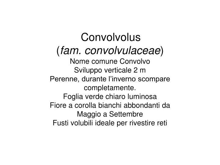Convolvolus