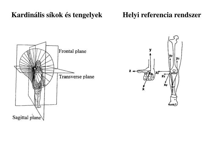 Helyi referencia rendszer