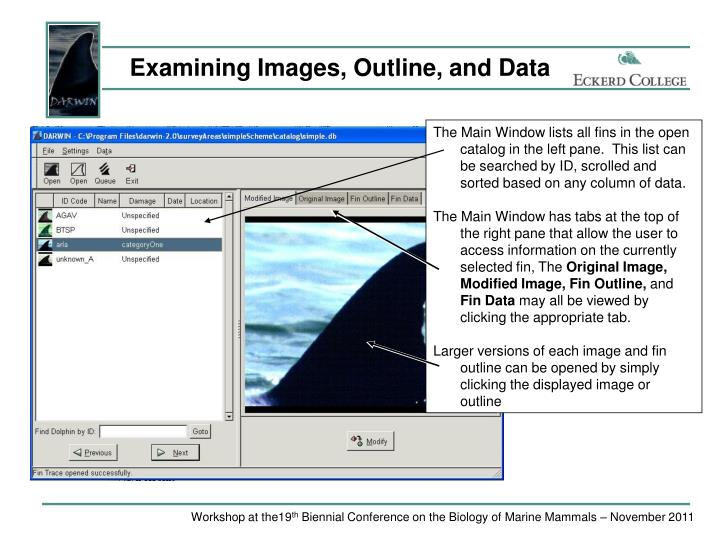Examining Images, Outline, and Data