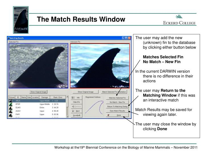 The Match Results Window