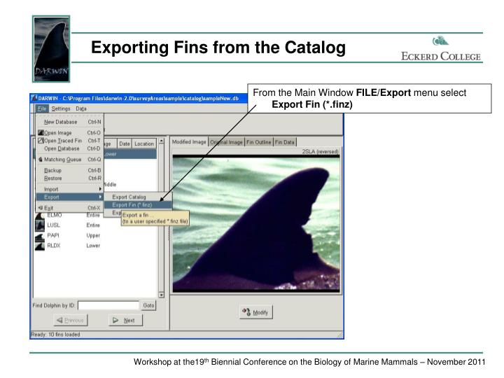 Exporting Fins from the Catalog