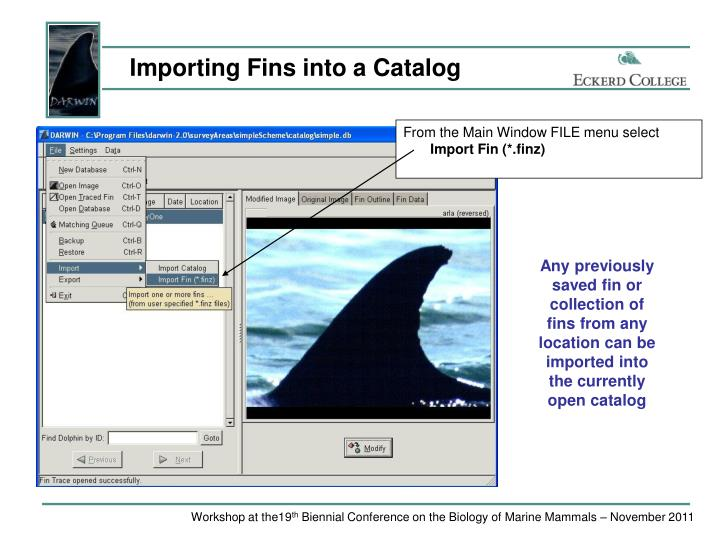 Importing Fins into a Catalog