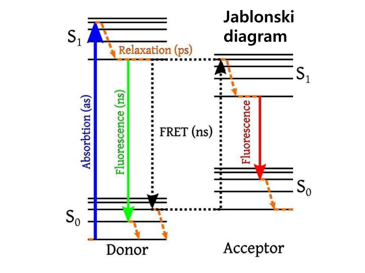 Ppt fret powerpoint presentation id4104752 jablonski diagram ccuart Gallery