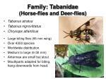 family tabanidae horse flies and deer flies