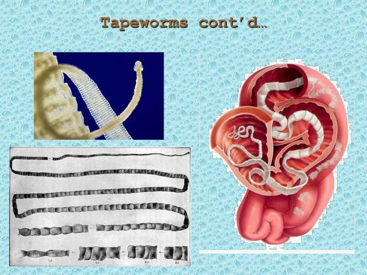 Tapeworms cont'd…