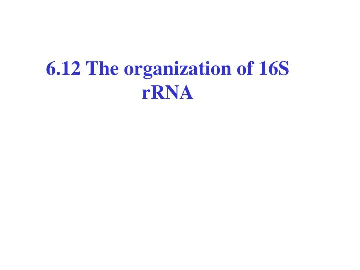 6.12 The organization of 16S rRNA