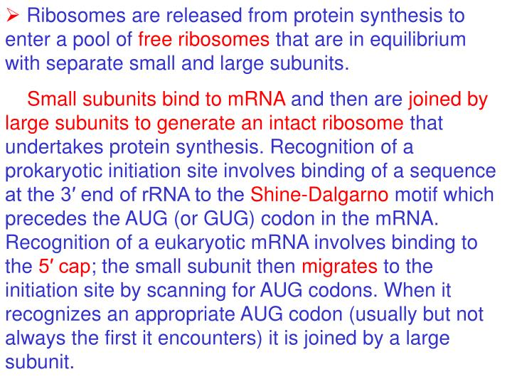 Ribosomes are released from protein synthesis to enter a pool of