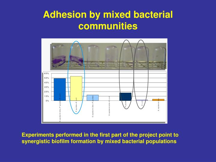 Adhesion by mixed bacterial communities