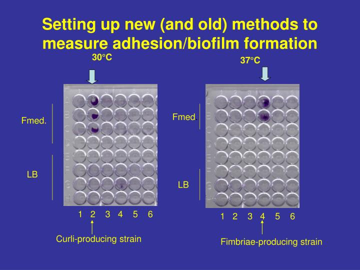 Setting up new (and old) methods to measure adhesion/biofilm formation