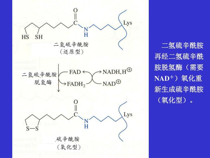 二氢硫辛酰胺再经二氢硫辛酰胺脱氢酶(需要