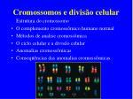 cromossomos e divis o celular