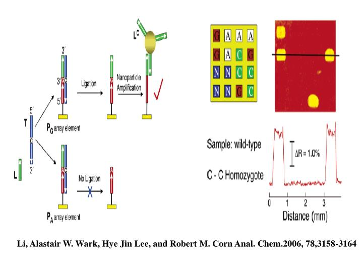 Li, Alastair W. Wark, Hye Jin Lee, and Robert M. Corn Anal. Chem.2006, 78,3158-3164