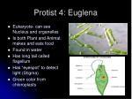 protist 4 euglena