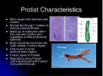 protist characteristics