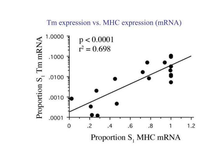 Tm expression vs. MHC expression (mRNA)