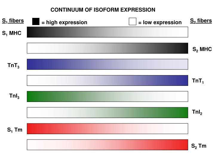 CONTINUUM OF ISOFORM EXPRESSION