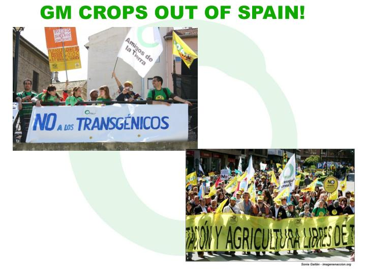 GM CROPS OUT OF SPAIN!