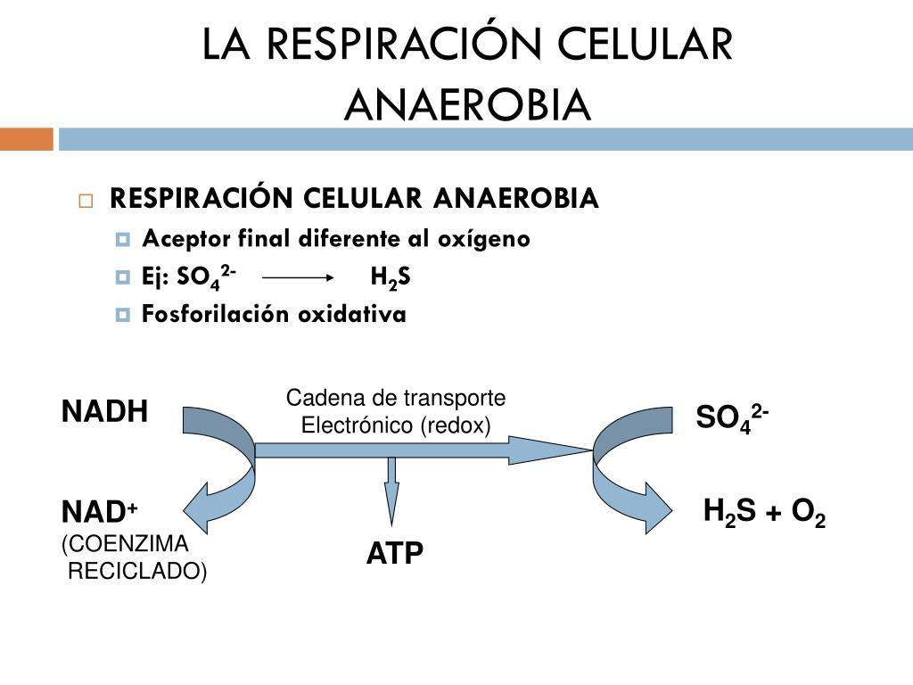 Es Posible Acelerar Ꭼl Metabolismo Ρara Adelgazar