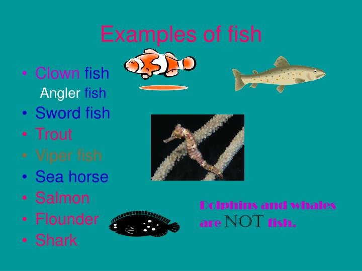Ppt Fish Powerpoint Presentation Id4116144
