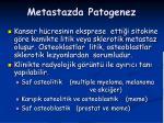 metastazda patogenez1