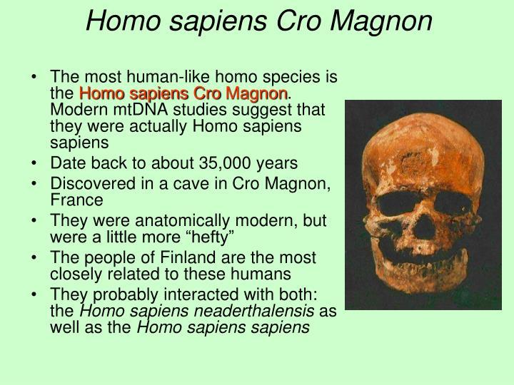 Homo sapiens Cro Magnon