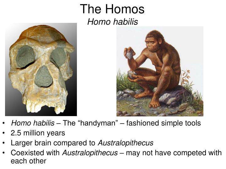 The Homos