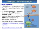 camp signal transduction pathways2