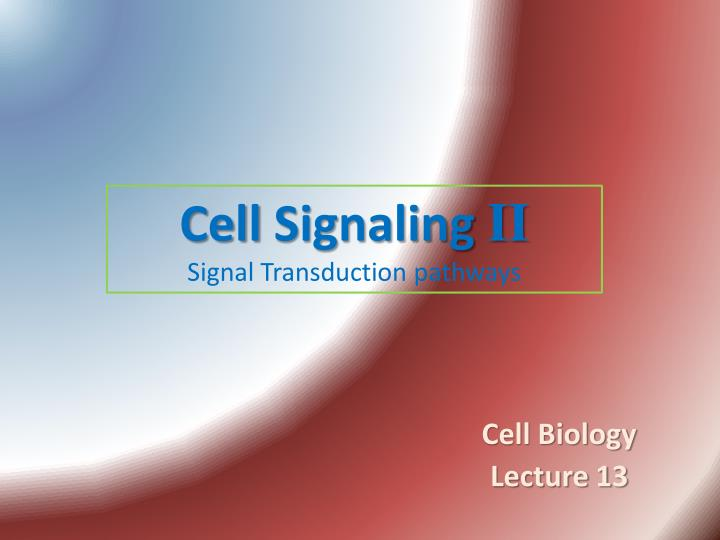 cell signaling ii signal transduction pathways n.