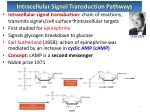 intracellular signal transduction pathways