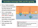 secondary messenger dag and ip3 signaling1