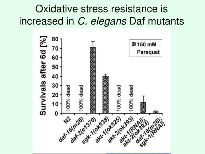 Oxidative stress resistance is increased in