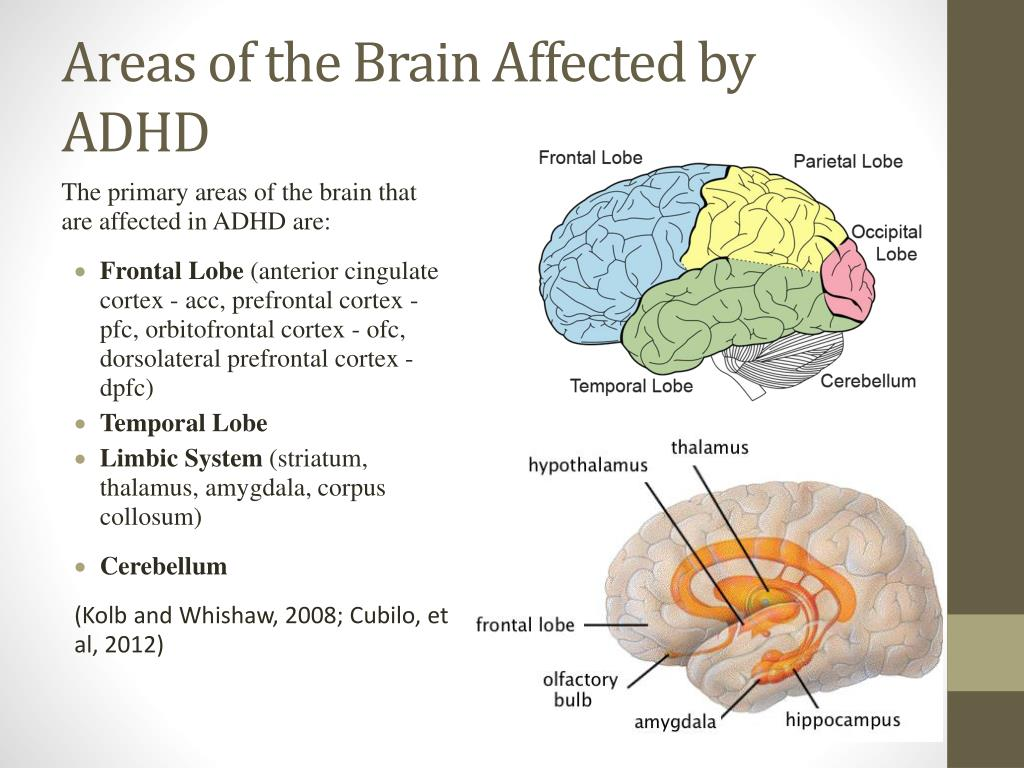 PPT - Areas of the Brain Affected by ADHD PowerPoint ...