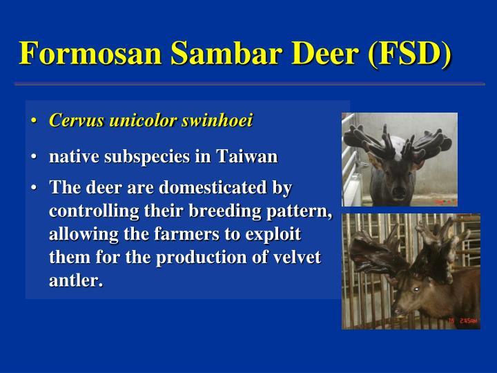Formosan sambar deer fsd