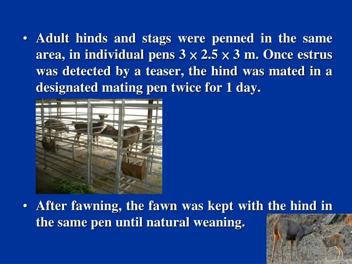 Adult hinds and stags were penned in the same area, in individual pens 3 × 2.5 × 3 m. Once estrus was detected by a teaser, the hind was mated in a designated mating pen twice for 1 day.